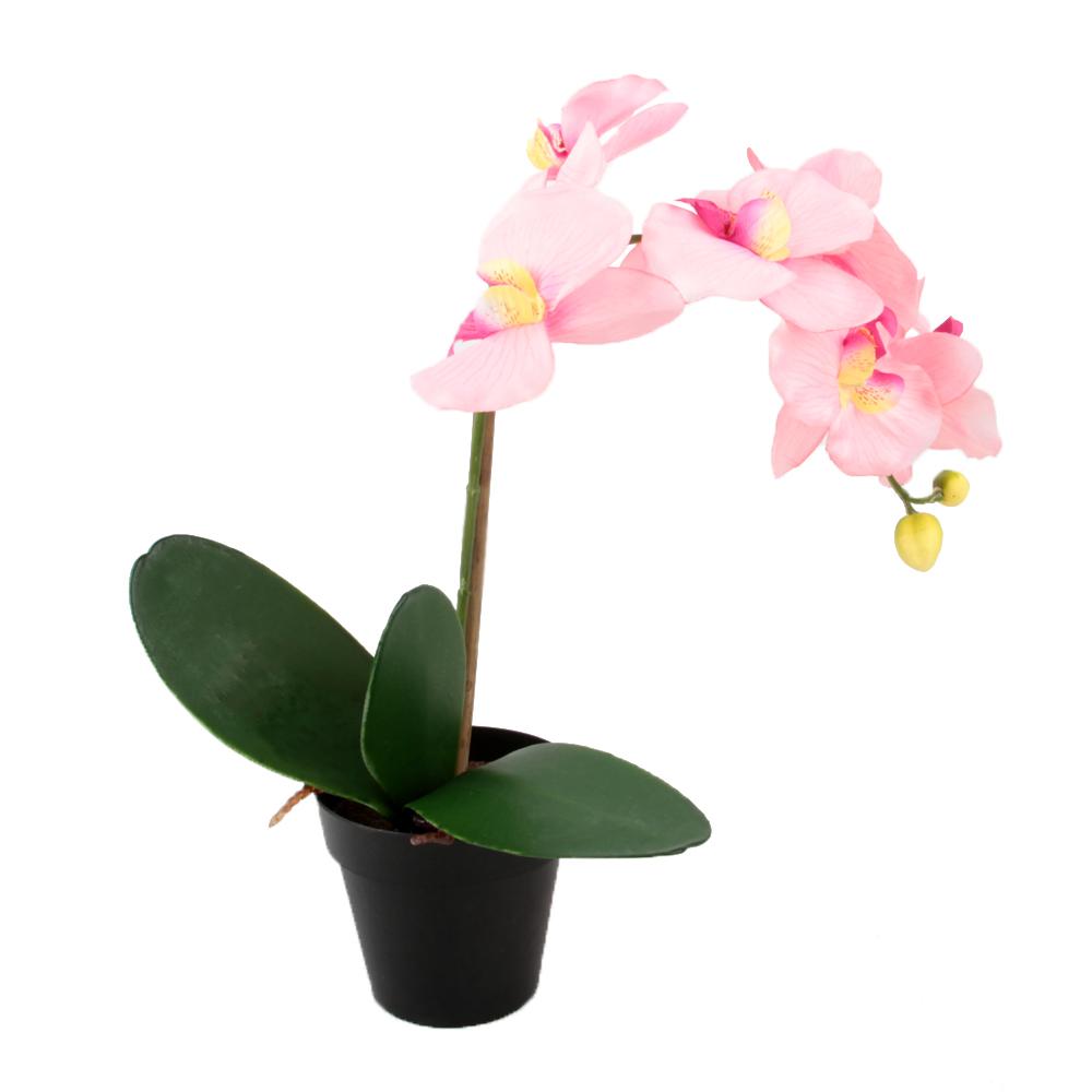 Орхидея в горшке картинки хорошего качества